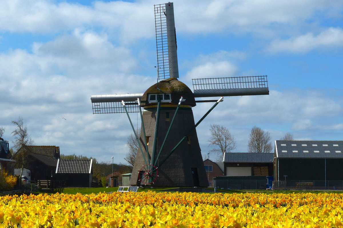 plant-field-farm-flower-windmill-wind-238803-pxhere.jpg